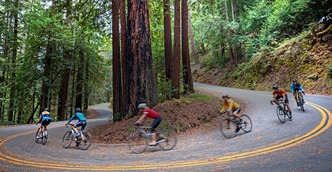Bikers in the Redwood Forest