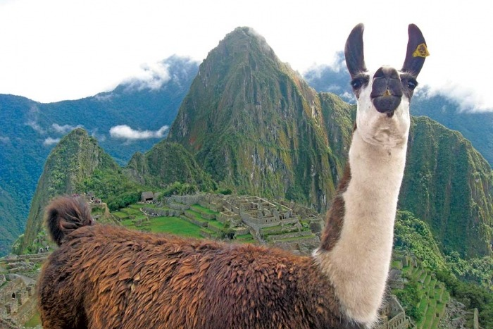 Llama - Peru Family Multi-Adventure Tour