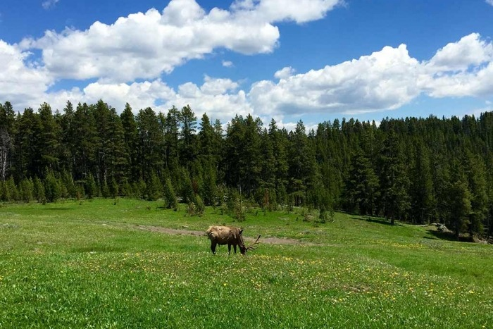 Elk - Yellowstone & Tetons Multi-Adventure Tour