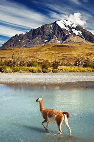 Wildlife in Patagonia, Chile