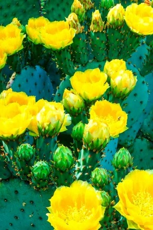 Cactus flowers - Arizona Bike Tour