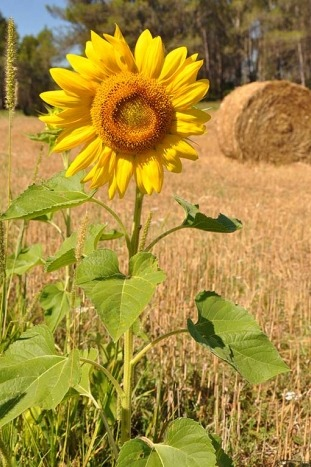 Sunflower - Pyrenees to Costa Brava Bike Tour