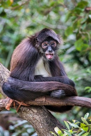 Monkey - Backroads Belize & Guatemala Multisport Adventure Tours