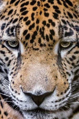 Leopard - Backroads Belize & Guatemala Family Multisport Tours