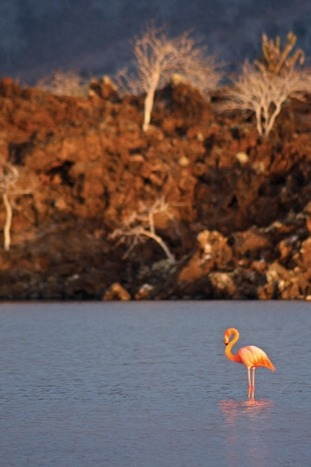 Galapagos & Andes Multi-Adventure Tour