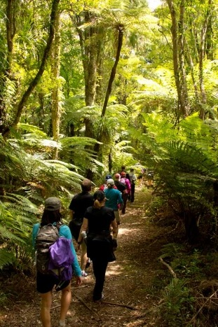 Backroads New Zealand walking and hiking tour