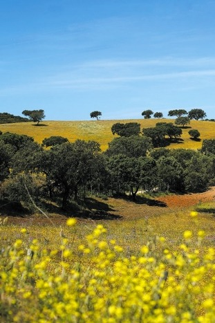 Countryside - Portugal Walking and Hiking Tour