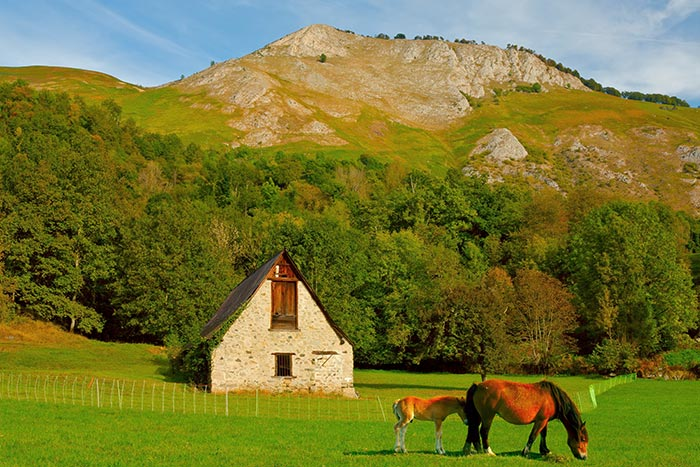 Horses, Basque Country, Spain