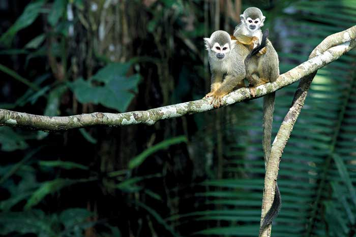 Wildlife - Backroads Galápagos, Andes & Amazon River Cruise Walking & Hiking Tour