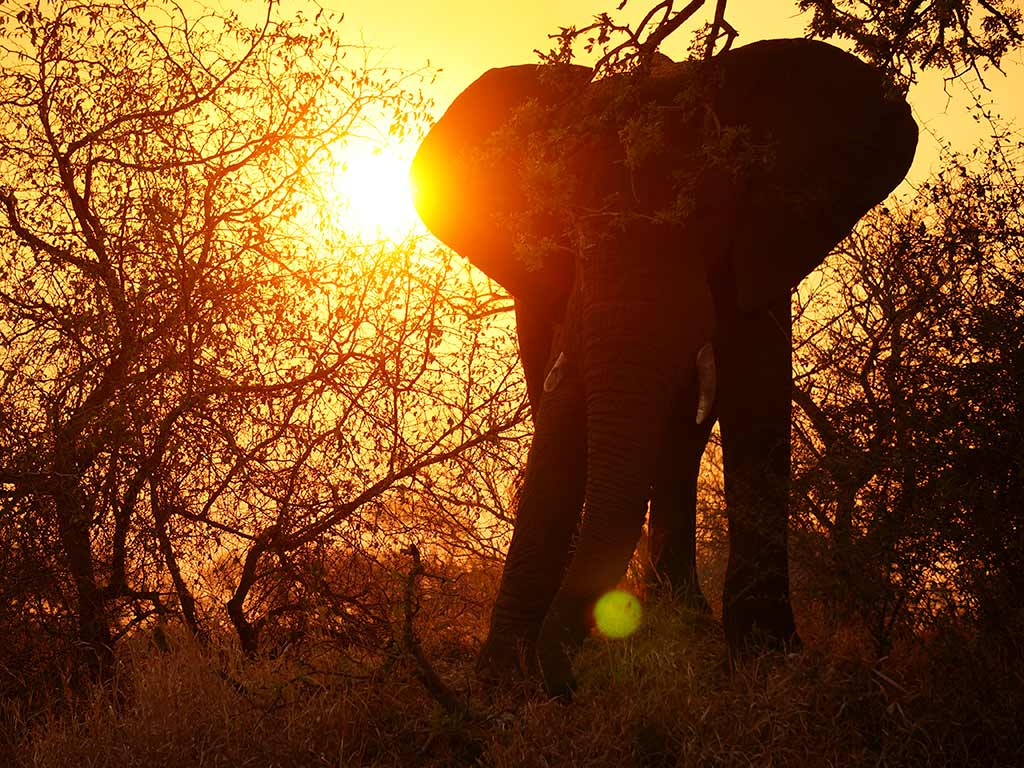 Elephant - South Africa & Botswana Family Multi-Adventure Tour