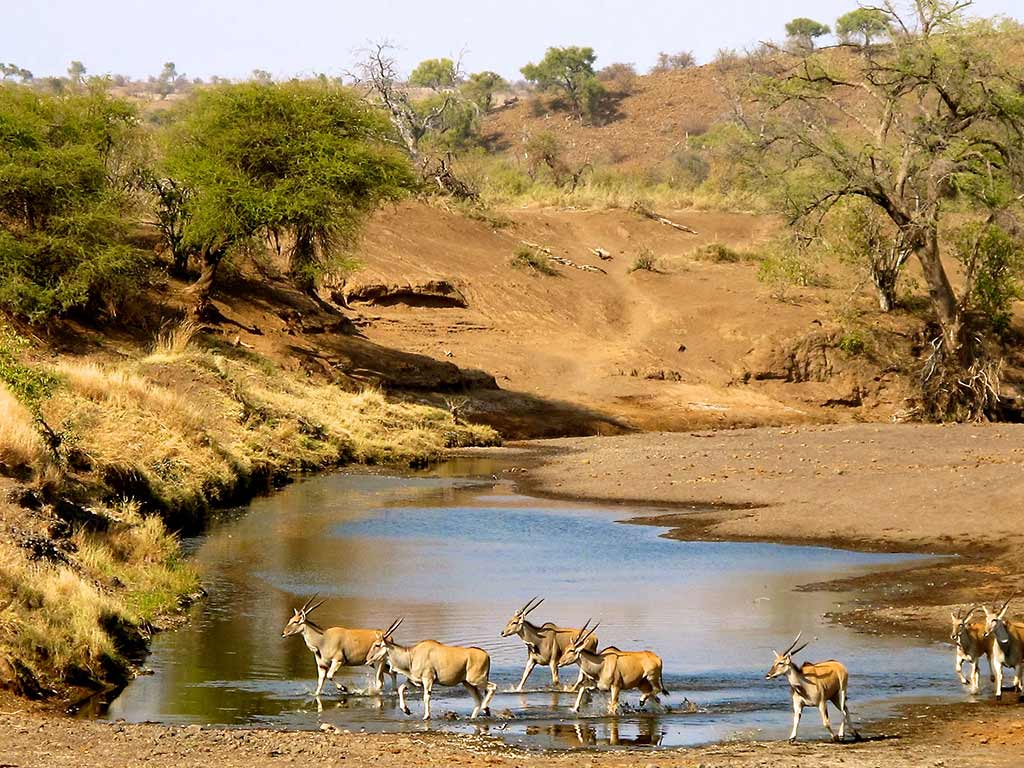 Watering hole - Backroads South Africa & Botswana Multi-Adventure Tours